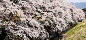 飯島町の移住・定住に関する補助金のお知らせ